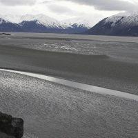 Oil Leak in Alaska's Beluga Whales Habitat Could Threaten Species on the Brink