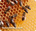 Monsanto buys leading bee research firm after being implicated in bee colony collapse