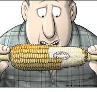 "Eating Monsanto GMO Corn Can ""Turn Your Gut into a Living Pesticide Factory"""