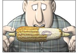 """Eating Monsanto GMO Corn Can """"Turn Your Gut into a Living Pesticide Factory"""""""