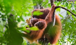 Leuser ecosystem: one of most biodiverse places on Earth under threat in pictures