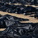 Pentagon Confirms It's Seeking 100,000 Body Bags in Virus Crisis