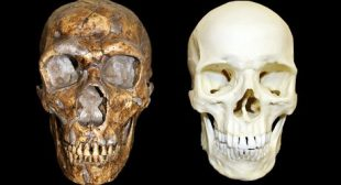 Neanderthals were not less intelligent than modern humans, scientists find