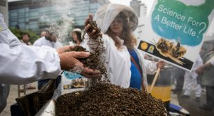 Rejecting Bayer Appeal, Top EU Court Upholds Ban on Bee-Killing Pesticides