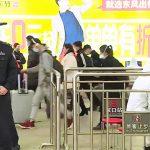 China Lifts Lockdown in Wuhan, Where Coronavirus Pandemic Began