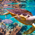 Media Release: Nature's Dangerous Decline 'Unprecedented'; Species Extinction Rates 'Accelerating' | IPBES