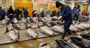 Radiation level in tuna off Oregon coast tripled after Fukushima disaster