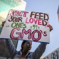 GMO crops may cause major environmental risks, USDA admits